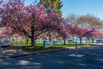 Seward Park Blossoms 3