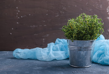 Thyme in small bucket