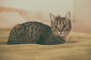 Photo of beautiful young cat lying on the bed.