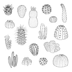 Set of cactuses, hand drawn vector illustration. outline sketch . Succulent collection. nature elements.