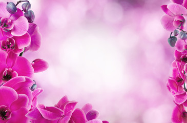 floral background with pink orchids