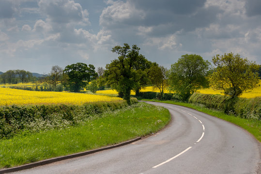 Bend in the road in the UK with rape seed oil fields either side in summer