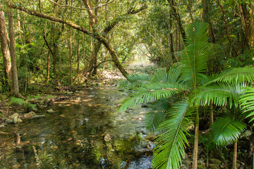 Daintree rain forest, Australie