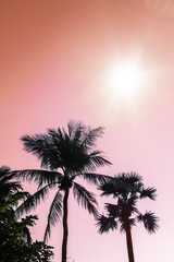 Palm trees silhouette against sun flares pink sky. Filter toned effect. Copy space