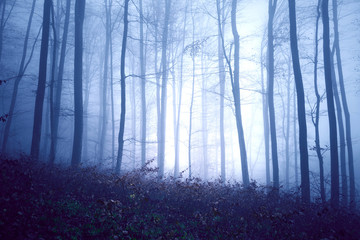 Wall Mural - Dark blue colored fantasy foggy forest landscape. Filter color effect used.