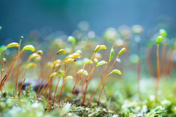 Soft Focus of Fresh green  plant. Blurry bokeh