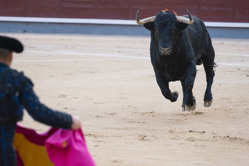 Bullfighter next to the bull in the ring