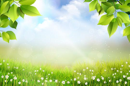 Wiosene tło, widok na trawę, kwiaty oraz na łąkę z pięknym rozmyciem bokeh