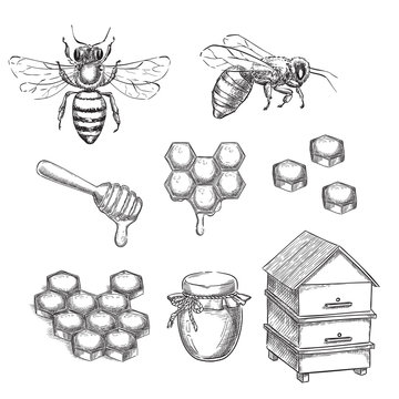 Honey and bee sketch vector illustration. Honeycombs, pot and hive hand drawn isolated design elements