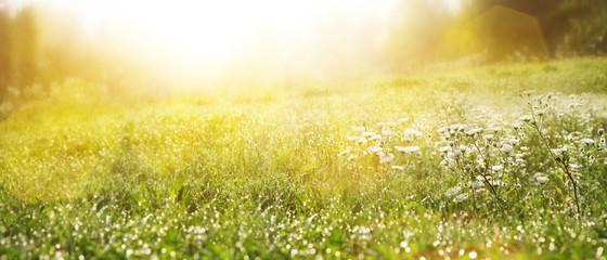 Fototapeta Gras im Frühling obraz