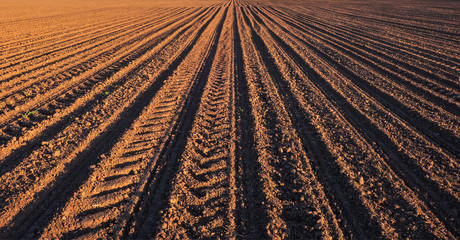 Rows of soil before planting. Furrows row pattern in a plowed field prepared for planting crops in spring. Wall mural