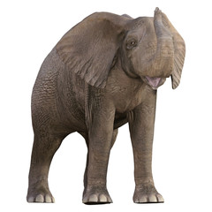Baby Elephant isolated on white, 3d render.