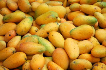 fresh mango in pile in the harvest season