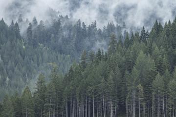 Misty Mountain Morning 2