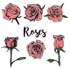 Vector  Hand drawn Roses