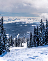 Wall Mural - Snow covered trees and deep snow pack on a ski run in the high alpine near the village of Sun Peaks in the Shuswap Highlands of central British Columbia Canada