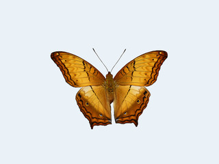 isolate Butterfly with clipping path