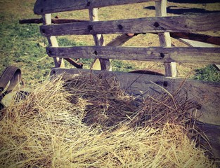 hay over the old wagon of the farm with vintage effect