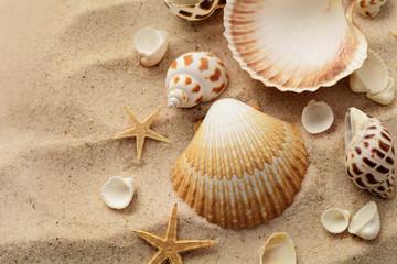 seashells on sand beach