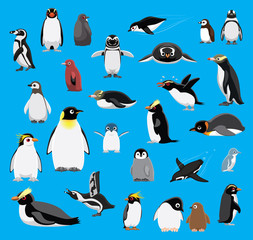 Various Penguin Cartoon Blue Background Vector Illustration