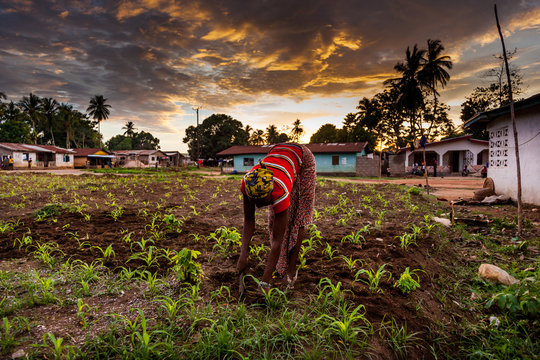 Yongoro, Sierra Leone, West Africa