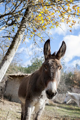 Portrait d'un âne