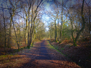 Forest Walk - area close to the Falkirk Wheel and the Union / Forth and Clyde canals.