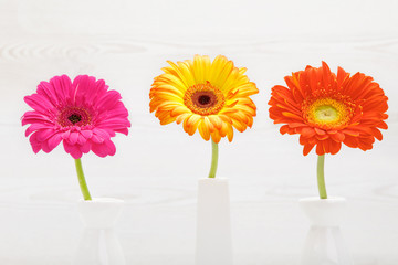Three gerbera flowers in vase on white wooden table. Daisy flower