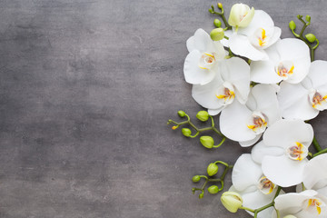 Tuinposter Orchidee Beauty orchid on a gray background. Spa scene.