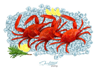 Crabs with rosemary and lemon on ice cubes. Vector illustrationin cartoon style. Seafood product design. Inhabitant wildlife of underwater world. Edible sea food.