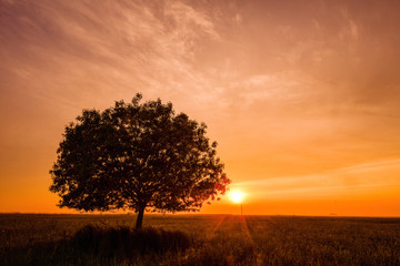 A solitary tree and sunset