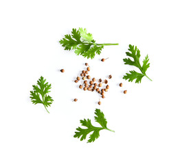 coriander leaf and seeds isolated on white background