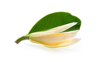 White Champaka isolated on white background