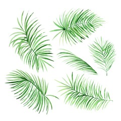 Watercolor palm leaves on white background in vector. Tropical elements for your design.