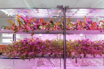 Hydroponics greenhouse with plants