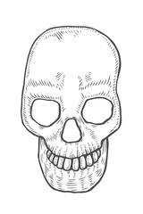 Skeleton of the human head