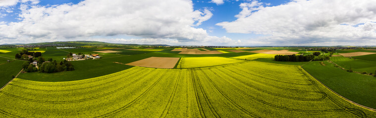 Fotoväggar - Blühende Rapsfelder (Brassica napus), Kreis Friedberg, Wetterau, Hessen, Deutschland
