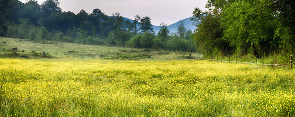 """""""The Yellows"""" American Tour Series a field of tiny yellow flowers and lime green grass Smokey Mountains in the background"""