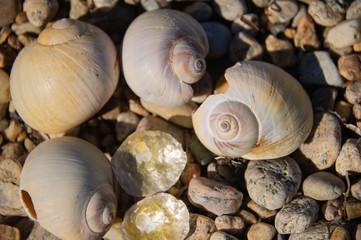 seashells Nantucket Massachusetts