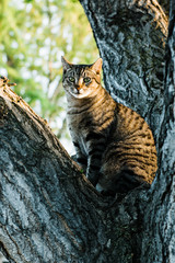 Cat sitting on tree and looking at camera