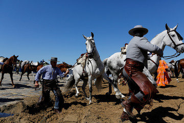 Pilgrims pull their horses on their way to the shrine of El Rocio in Donana National Park, southern Spain