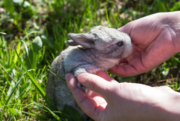 a woman takes a little baby rabbit in his arms