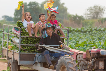Lifestyle of a farmer family at tabacco farmland of thailand.