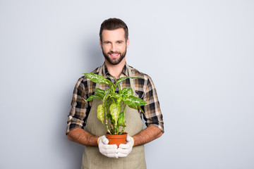 Portrait of cheerful brunet  florist with stubble in shirt and apron showing, having house plant, diffenbachia in pot looking at camera isolated on grey background
