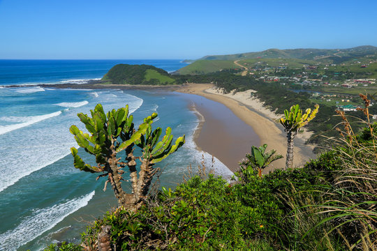 Beach of Coffee Bay on the Wild Coast in Eastern Cape, South Africa, as seen from the top of a cliff with a cactus tree in the foreground