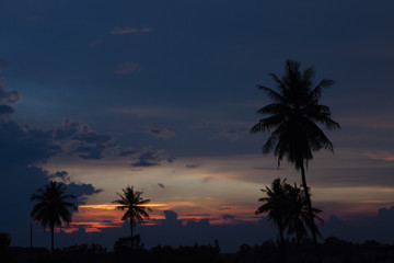 The silhouette of a coconut tree with golden evening sky.
