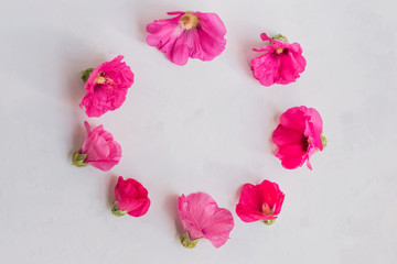 Flat lay frame of pink flowers