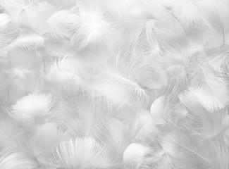 Feather Group Fotoväggar