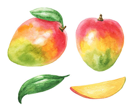 Hand drawn watercolor mango set with green leaves and cut slice, isolated on white background. Delicious fruit illustration.