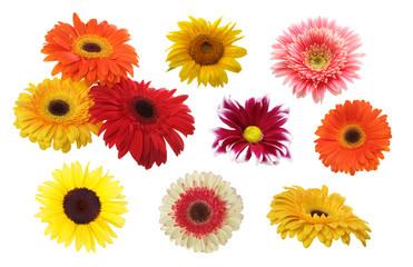 Gerbera, chamomile, sunflower lower isolated